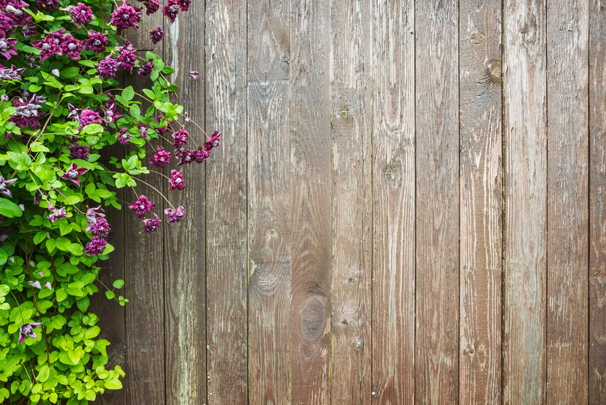 Wooden wall with decorative flowers. Summer garden background photo texture